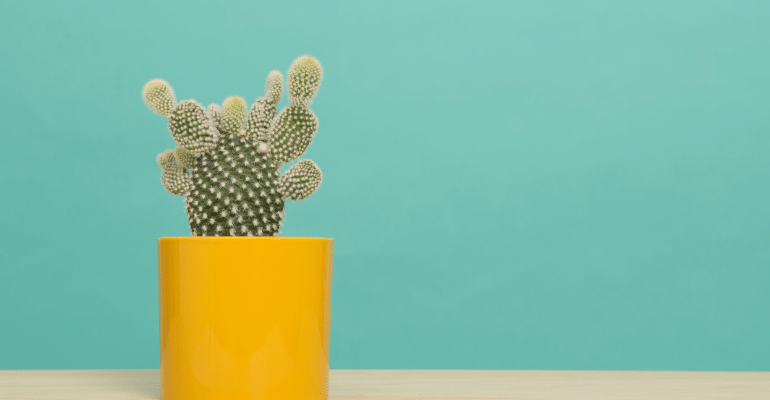 Cactus in a yellow vase against a green background